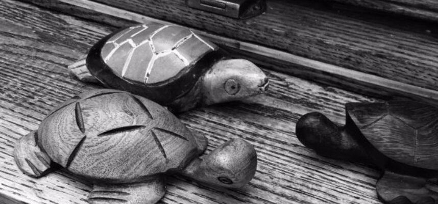 TurtleConference